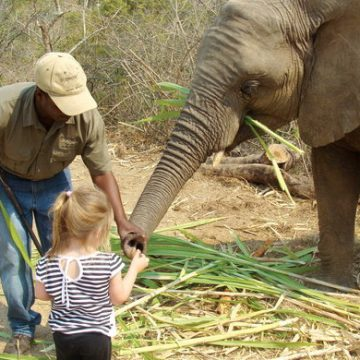 Children and the Gentle Ellies